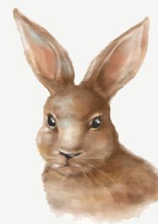 Ideal Bunny